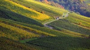 Bewegung im Rheingauer Weinbau