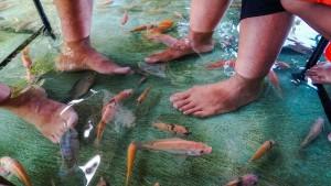 Restaurant bietet Fisch-Pediküre beim Essen an