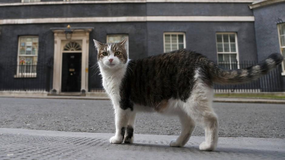 Seit zehn Jahren lebt Londons Regierungskater Larry in der Downing Street.