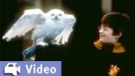 """Video-Kritik: """"Harry Potter und der Stein der Weisen"""""""