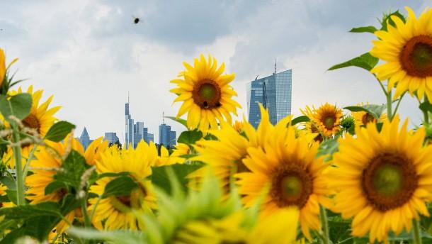 Wie Sie Ihr Geld richtig in Nachhaltigkeits-ETF stecken