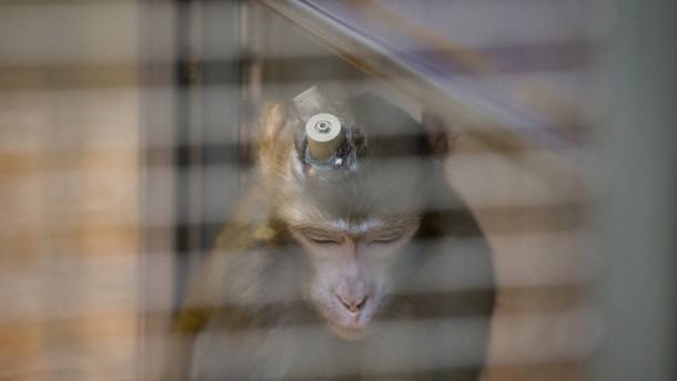 Weniger Tierversuche in Hessen