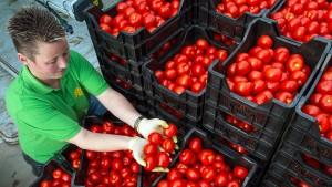 Die Liebesäpfel sollen härter werden