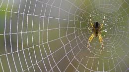 Spinnen? Warum nicht?