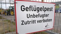 Kreis Harburg ordnet wegen infizierter Tiere Stallpflicht an