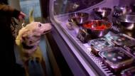 Delikatessen für den Hund