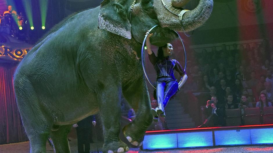 Im Circus Krone in München: Jana Mandana Lacey-Krone tritt mit Elefantendame Bara auf.