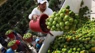 Amerika holt Tausende Arbeitskräfte aus dem Ausland