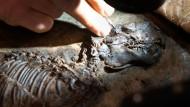 Funde aus Grube Messel eine Million Jahre älter