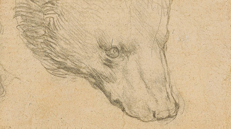 """Leonardo da Vinci, """"Kopf eines Bären"""", um 1480, Silberstift auf Papier, 7 mal 7 Zentimeter, versteigert bei Christie's für 7,5 Millionen Pfund (mit Aufgeld 8,86 Millionen)."""