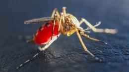 Hubschrauber der Stechmückenbekämpfer kaputt