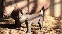 Nashörnchen geboren