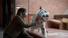 Haben Zootiere ihre Besucher vermisst?