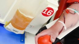 Forderung nach gelockerten Blutspende-Regeln wird lauter