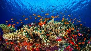 """""""Tote Korallen bekommen keine Babys"""""""