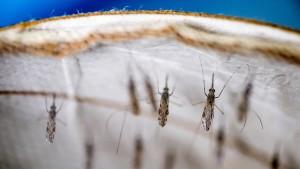 WHO empfiehlt Malaria-Impfstoff für Kinder