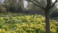 Die Frühlingsbotin