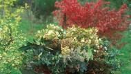 Wertvoller Mist: Im Garten wie im Haushalt fällt vieles ab, was auf den Kompost wandern kann.