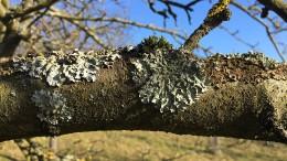 Die Rückkehr der Algen und Flechten
