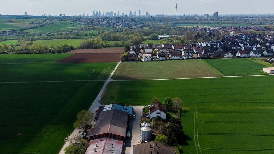 So fern und doch so nah: Über den Bauernhof der Familie Schmidt und den Stadtteil Harheim wandert der Blick zur Frankfurter Skyline.