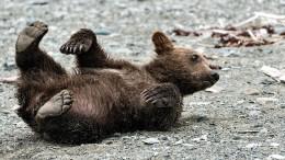 Freiheit für die Zirkusbären