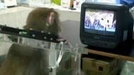 Affen lieben Fernsehen