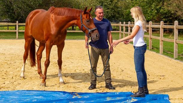 Das Pferd, dein Lebenstrainer