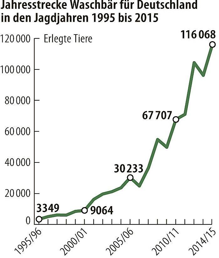 Erlegte Waschbären in Deutschland von 1995 bis 2015