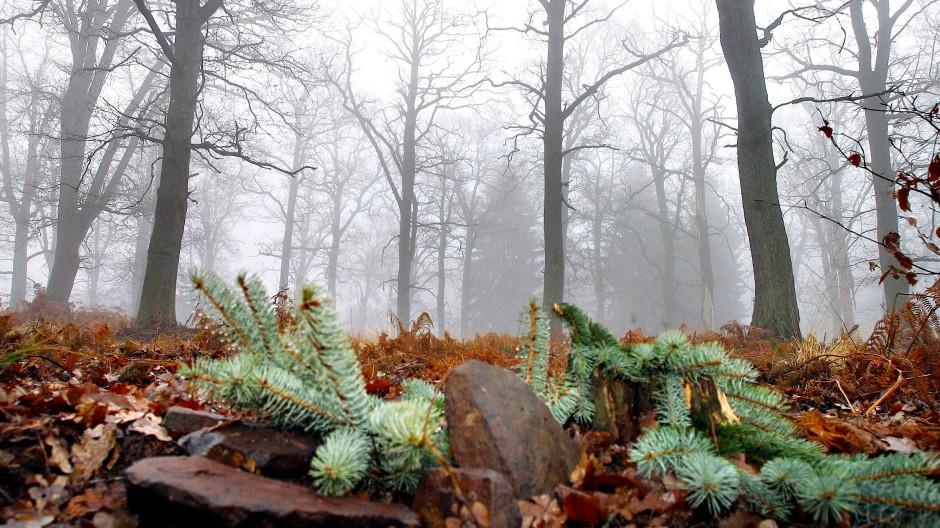 Naturverbunden: Im Friedwald kann Björn Weiler gut trauern. Wälder sind für ihn zu Orten der inneren Einkehr geworden.