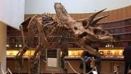 Riesen-Dino als Ladenhüter