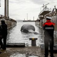 Knapp 20 Meter lang, rund 70 Tonnen schwer: Die Küstenwache hat den Kadaver des Wals in den Hafen von Neapel geschleppt, wo er untersucht werden soll.