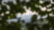 Folgen der Dürre: Der Frankfurter Stadtwald ist in Gefahr.1