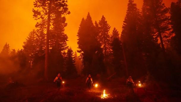 Feuerwerk auf Party löst Waldbrand aus