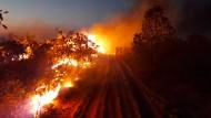 Umweltschützer vermuten, dass die Brände im Amazonas von Landwirten gelegt wurden.