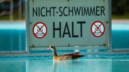 Frankfurter Bäderbetriebe wollen wieder Nilgänse beseitigen