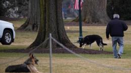 Joe Biden verbannt Hunde aus Weißem Haus