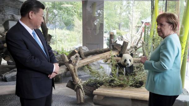 Pandas in Berlin können besucht werden