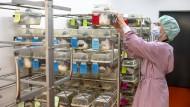 Tierversuche an Uni Mainz: So fühlt es sich an, mit Mäusen und Ratten zu expwrimentieren