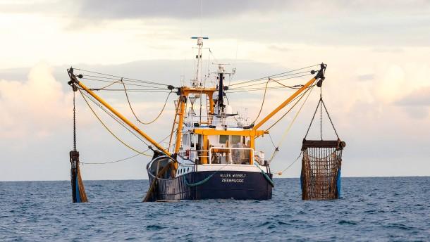 Fischbestände können große Mengen an CO2 speichern