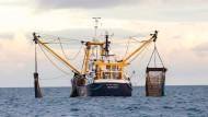 Helfer fürs Weltklima: Große Fische als Kohlenstoffsenken
