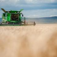 Gefährliche Trockenheit: Hessens Landwirte sorgen sich um ihre Ernte (Archivbilder).