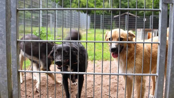 Tierschützer fordern Chip-Pflicht für Hunde und Katzen