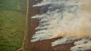 Amazonas-Brände nehmen wieder zu