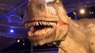 Dinosaurier zum Anfassen