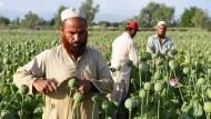 Opium für die Taliban