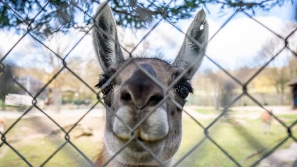 Zoos spüren finanzielle Einbußen