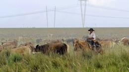 Deutsche Autos gegen argentinisches Rindersteak