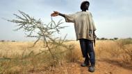 Westafrikaner verwandeln Wüste in Ackerland