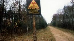 Tschernobyl-Sperrzone ist Paradies für Wildtiere