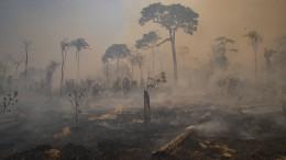 Rettungseinsatz für Wildtiere in Brandgebiet